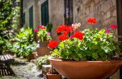 Tuscan scenery Stock Image