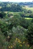 Tuscan sikt Arkivfoton