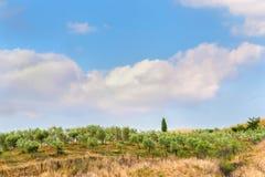 Tuscan sommar på fälten i den härliga sikten Arkivfoto