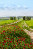 Tuscan summer landscape with cypresses Royalty Free Stock Image