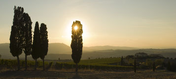 Tuscan sunset Stock Photography