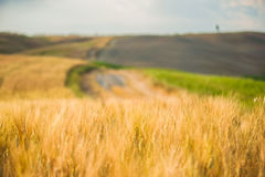 Tuscan tranquility walking on the road between fields Stock Images