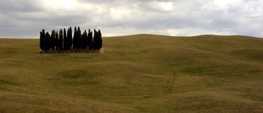 Tuscan Trees. Set of pencil cypress trees in Tuscany Stock Image