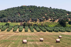 Tuscan village landscape Stock Photos