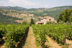 Tuscan vineyard. Vineyard and farmhouse in the Tuscan countryside stock images