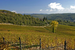 Tuscan Vineyard. A view of a large Tuscan Vineyard. Chianti, Tuscany, Italy Stock Image