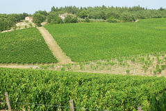 Tuscan vineyard Stock Photography