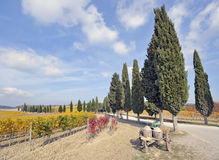 Tuscan vineyard in fall Royalty Free Stock Photography