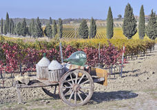 Tuscan vineyard in fall Stock Photo