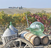 Tuscan vineyard in fall Stock Photos