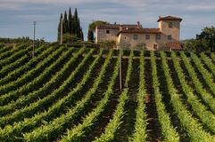 Tuscan vineyard and farmhouse. Tuscan vineyard, farmhouse and cypress trees on a sunny Italian day stock photo
