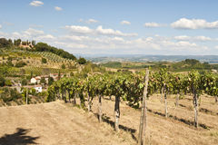 Tuscan Vineyard near Florence Italy Stock Image