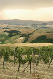 Tuscan vineyard with rolling hills. royalty free stock photos