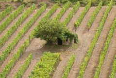 Tuscan vineyard with small house. royalty free stock image