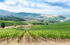 Tuscan vineyard in summer season Royalty Free Stock Photo