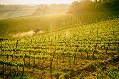 Tuscan vineyard at sunrise, toned image. Tuscan vineyard at sunrise, tractor spraying vines, toned stock photography