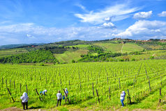 Tuscan vineyard with workers Royalty Free Stock Photos