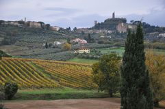 Tuscan vineyards Autumn Royalty Free Stock Photos