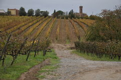 Tuscan vineyards Autumn Stock Images