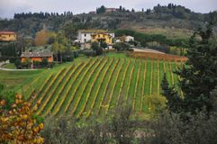 Tuscan vineyards near Pisa chianti Stock Photo