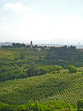 Tuscan Vineyards & Olive Groves 03 stock photography