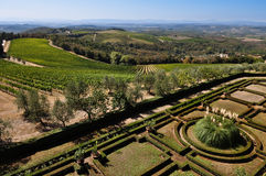 Tuscan vineyards and olive trees Royalty Free Stock Photos
