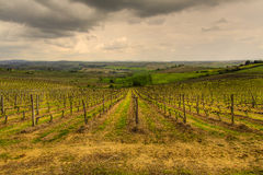 The Tuscan vineyards Stock Images