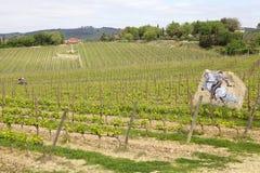 Tuscan vineyards stock photography