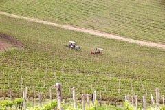 Tuscan vineyards Royalty Free Stock Photography