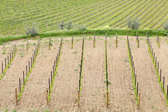 Tuscan vineyards Stock Photos
