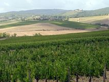 tuscan vingård Royaltyfri Bild