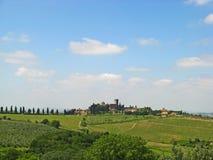 Tuscan vingårdar & Olive Groves 04 Arkivfoto