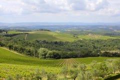 Tuscan vinland arkivbild
