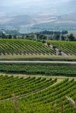 tuscan vinyard στοκ φωτογραφία