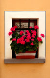 Tuscan window with pink flowers Stock Image