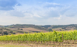 tuscan wineyard Στοκ εικόνες με δικαίωμα ελεύθερης χρήσης