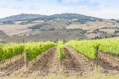 tuscan wineyard Royaltyfria Foton