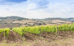 tuscan wineyard Στοκ Εικόνα
