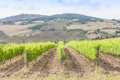 Tuscan wineyard Royalty Free Stock Photos