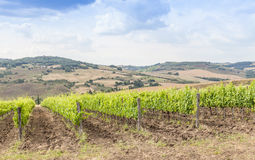 Tuscan wineyard Stock Image