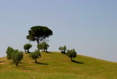 Tuscany. Trees on hill in tuscany-Italy Royalty Free Stock Photo