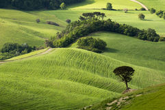 tuscany obraz stock