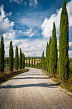 Tuscany. Scenic view of typical Tuscany landscape with cypress alley Royalty Free Stock Images