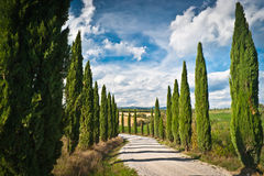 Tuscany. Scenic view of typical Tuscany landscape with cypress alley Stock Photo