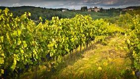 Tuscany. Landscape with wine yard Royalty Free Stock Images