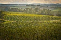 Tuscany. Landscape with wine yard Stock Photo