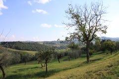 Tuscany 9 Zdjęcie Royalty Free