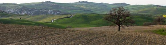 tuscany arkivfoto