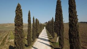 Tuscany, aerial landscape of a cypress avenue near the vineyards. Spring time stock video footage