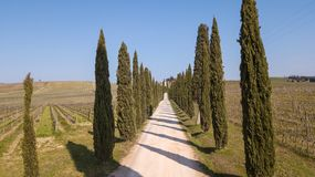 Tuscany, aerial landscape of a cypress avenue near the vineyards royalty free stock photo